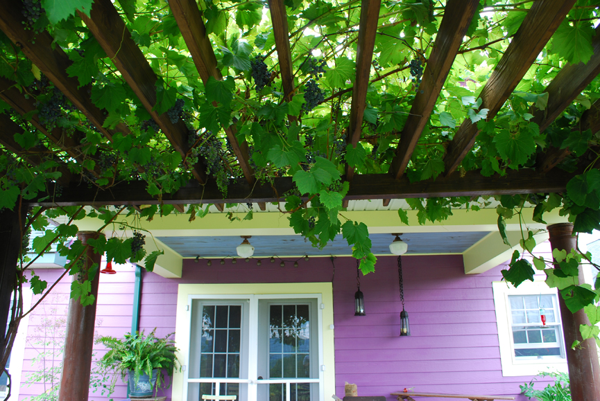 Fruiting Vines are Art